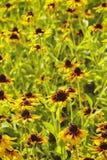 Flowerbeds coloridos de florescência fotografia de stock royalty free
