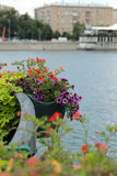 Flowerbeds. Colourful Flowerbeds over the river in city park, Moscow, Russia stock photography