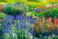 Flowerbeds de florescência fotos de stock royalty free