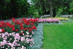 Flowerbeds de Rosa em um jardim de Berna, Switzerland Imagens de Stock Royalty Free
