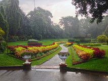 Flowerbeds with flowers in Royal Botanical Garden. In Kandy stock photography
