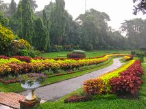 Flowerbeds with flowers in Royal Botanical Garden. In Kandy stock photo