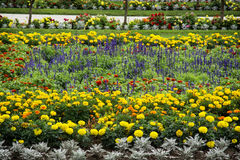 Flowerbeds in the garden Royalty Free Stock Image