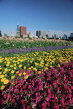 Flowerbeds in Grant Park royalty free stock images