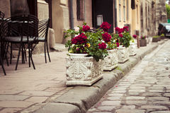 Flowerbeds in Lviv. Flowerbeds on the street in Lviv, Ukraine stock photos