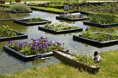 Flowerbeds na água fotografia de stock