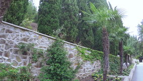 Flowerbeds with palm trees stock video