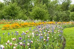 Flowerbeds in Park. Curved flowerbeds with colorful spring flowers stock image
