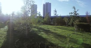 Flowerbeds and trees with bushes in the city park stock video