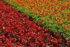 Flowerbeds vermelhos e alaranjados imagem de stock royalty free