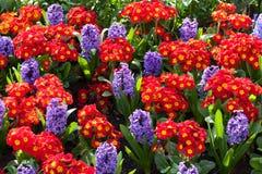 Flowerbeds vibrantes Fotos de Stock Royalty Free