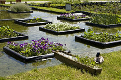 Flowerbeds on water Stock Photography