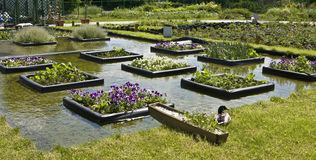 Flowerbeds on water Royalty Free Stock Photos