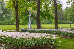 Flowerbeds with white tulips in the park. In the morning royalty free stock photos