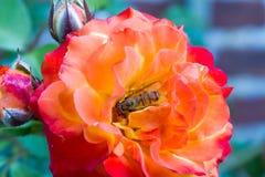 Flowerbee en subió Imagen de archivo