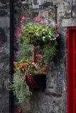 Flowerbox Fotos de archivo libres de regalías