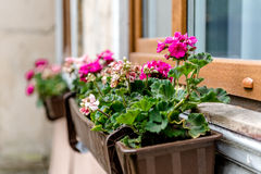 Flowerbox outdoors Stock Photography