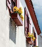 Flowerboxes. In three windows with yellow flowers Stock Image