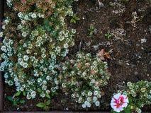 Flowerbrdhoogtepunt van kleine witte bloemen met grote roze bloem in de hoek stock fotografie