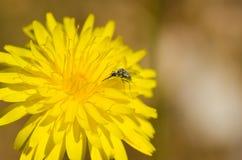 Flowerbug stockfotografie