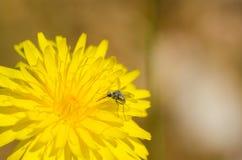 Flowerbug stockfotos