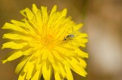 Flowerbug lizenzfreie stockfotos