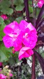Flowerburst Arkivfoton
