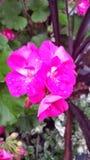 Flowerburst Stock Photos