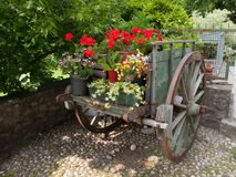 Flowercart med den röda blomman royaltyfri fotografi