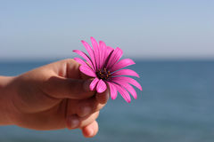 Flowerchild Stock Photos