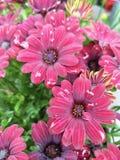 Flowerd rouge image libre de droits