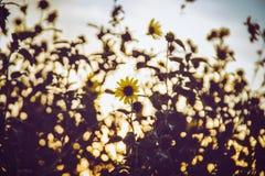 Flowerdate Image libre de droits