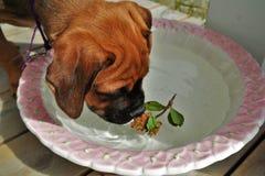flowerdog Royaltyfri Bild