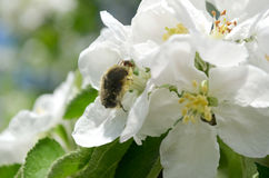 Flowereater und Ameise Lizenzfreies Stockbild