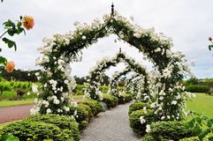 Flowered Arc with White Roses royalty free stock images