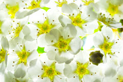 Flowered background Royalty Free Stock Images