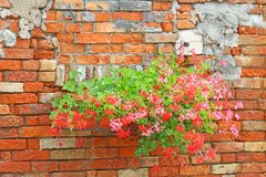 Flowered balconies with pots of Geraniums in the rural house Royalty Free Stock Photography