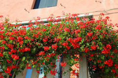 flowered balcony with a window in the house and many flower pots Stock Photo