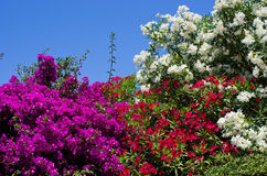 Flowered bushes Royalty Free Stock Photography