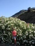 Flowered bushes. A woman stands in a beautiful flowered bushes. Crete. Greece Royalty Free Stock Images