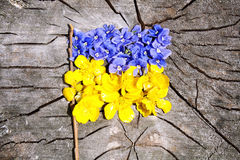 Flowered flag of the Ukraine Royalty Free Stock Images