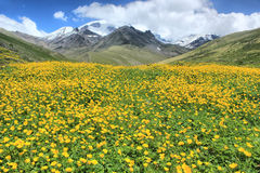 Flowered hill in mountains Royalty Free Stock Photo