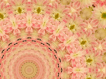 Pink flowered kaleidoscopic design Royalty Free Stock Photography