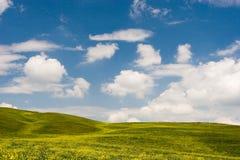 Flowered Landscape Stock Image