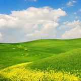 Flowered Landscape Stock Images