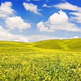 Flowered Landscape Royalty Free Stock Photo