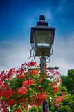 Flowered Lantern royalty free stock images