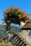 Flowered pergola Royalty Free Stock Images