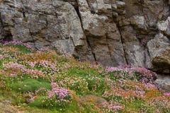Flowered rocky coastline Royalty Free Stock Photo