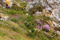 Flowered rocky coastline Royalty Free Stock Images